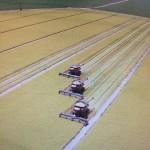 Rice harvest - 8-15